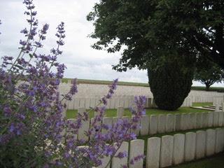 lavender (2)